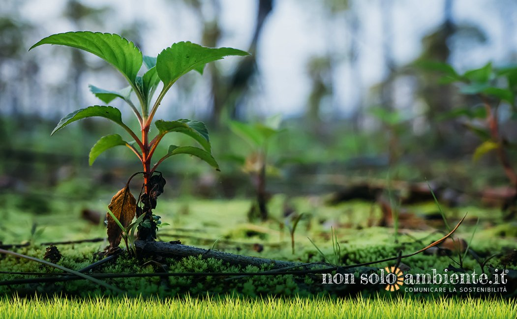 Tree planting will save the Planet!