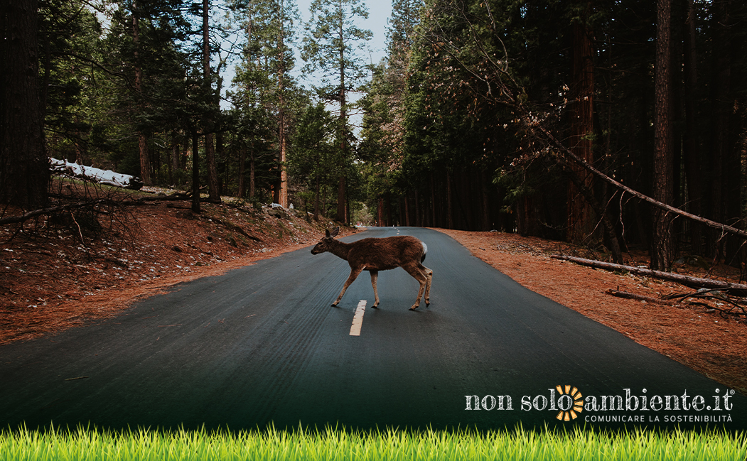 The importance of wildlife bridges for drivers and animals safety